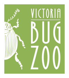 Bug zoo logo