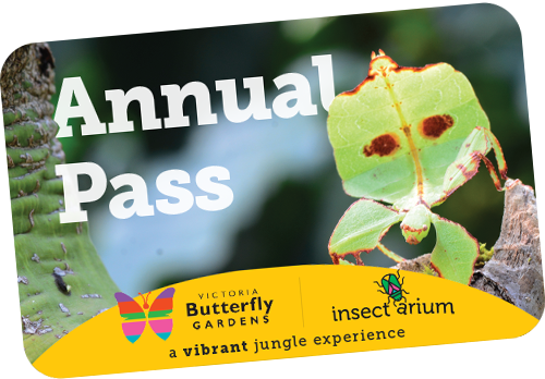 Victoria Butterfly Gardens Annual Pass